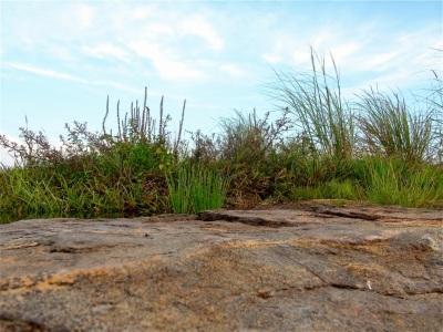 Herbes sur le rocher
