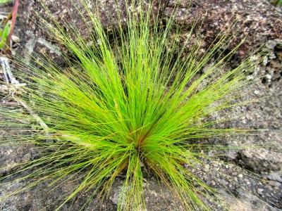 Herbes sur un rocher