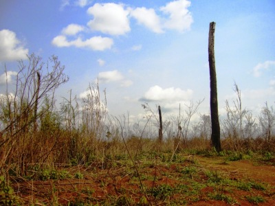 arbre calciné