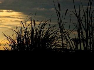 crépuscule en brousse