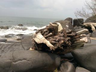 bois sur le rivage